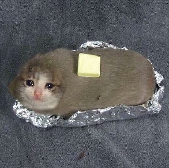 baked cat potato sad