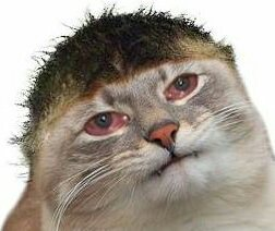 justd sad cat